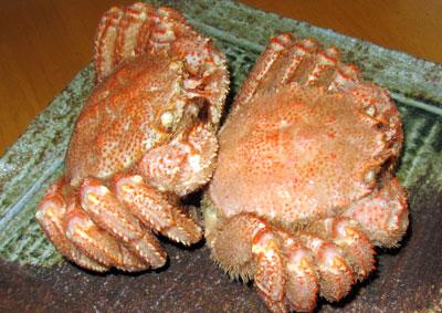 【毛ガニ】漁獲量が激減し、価格が高騰してきた味噌の美味しいカニ