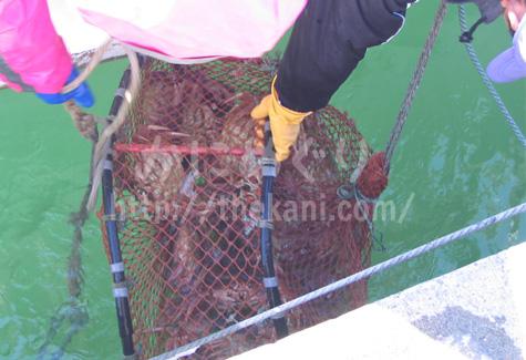 毛ガニ漁の様子