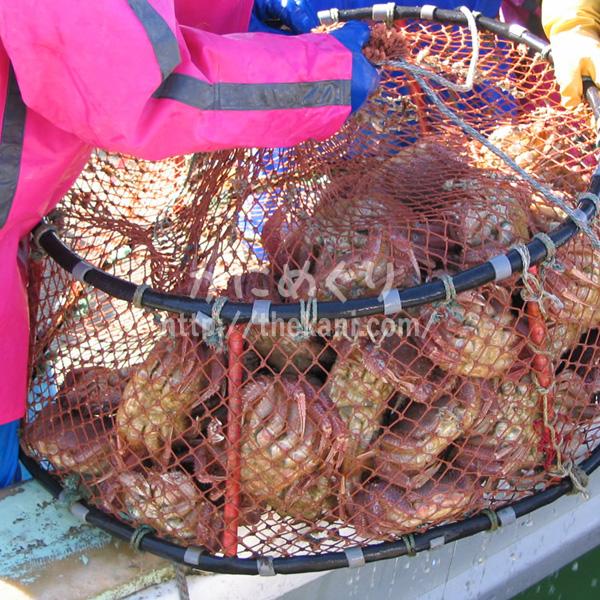 北釧水産の毛ガニ漁