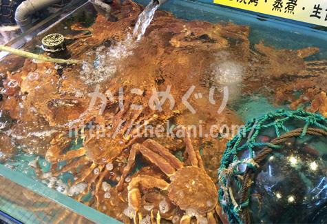 函館朝市、水槽内の活き毛ガニ