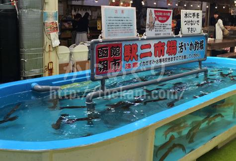 函館朝市の活きイカ釣り